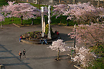 Big_Weekend_Cherry-Blossoms