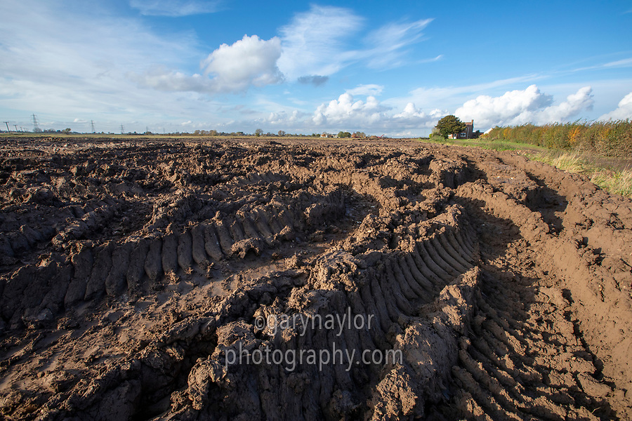 Rutted headland from tractors & trailers following heavy rain - Lincolnshire, November
