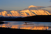 Golden Sun Shines On Mt. Denali Reflected In Wonder Lake In Denali National Park, Alaska.