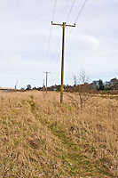Line of telegraph poles cutting through the marsh area Boyne Bank, Marsh Road
