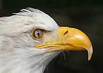 Eagle Portfolio