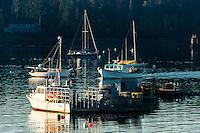 Lobster boats in Southwest Harbor, Mount Desert Island, Maine, USA