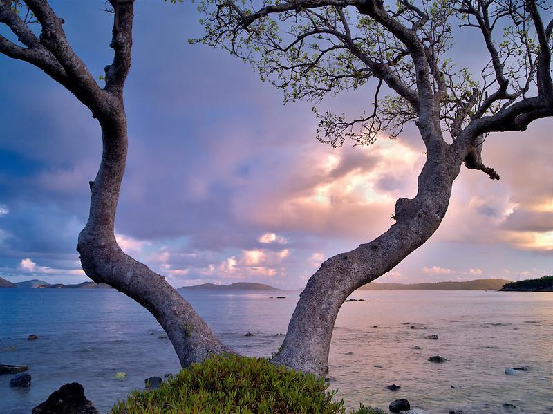 Tree framing ocean at Cruz Bay, St. John, Virgin Islands.