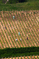 Vineyard workers spraying disease treatment. Monts Damnes. Domaine Henri Bourgeois, Chavignol, Sancerre, Loire, France