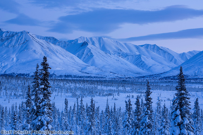 Winter landscape of  the Chugach Mountains in spruce forest taken at dusk in the Eureka area in Southcentral, Alaska   January 2016