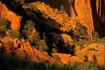 Red cliffs at sunset, Kolob Canyon, Zion National Park, UTAH