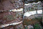 Faulting with veins of gypsum in Lower Lias rocks Watchet, Somerset, England