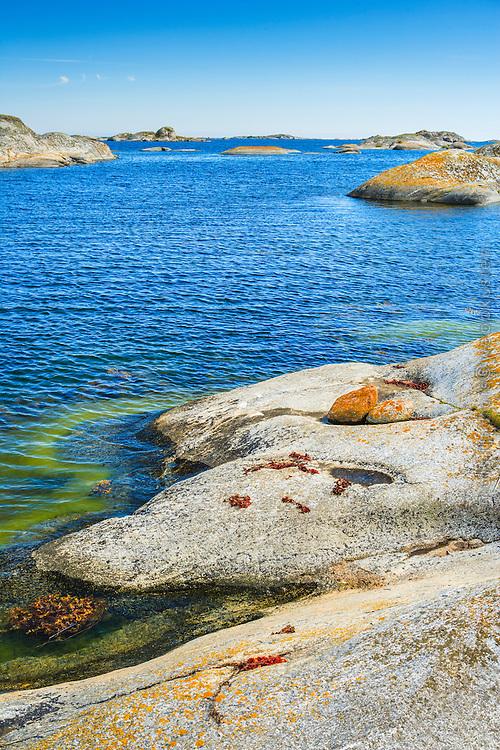 Slät klipphäll med tång på Stora-Nassa i Stockholms  ytterskärgård