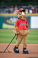 Billings Mustangs mascot Homer helps rake the field between innings of a Pioneer League game against the Grand Junction Rockies at Dehler Park on August 14, 2019 in Billings, Montana. Grand Junction defeated Billings 8-5. (Zachary Lucy/Four Seam Images)