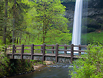 Silver Falls State Park, OR<br /> South Falls plunges 177 ft over basalt cliff into <br /> Silver Creek Canyon framed with foot bridge and big leaf maples in early spring