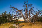 The sunset glow on the horizon at the Minarets viewpoint with dead trees in the foreground along a path. Magic hour lends an electric blue to the sky.