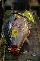 Tsukiji Market_Tokyo