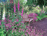 Garden bench. G. Owen Garden. Eugene, Oregon.