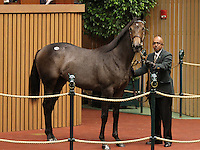 Hip #6 Distorted Humor - Our Golden Song filly consigned by Lane's End sold for $325,000 at the Keeneland September Yearling Sale.  September 10, 2012.