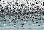 Monerey Bay feeding frenzy