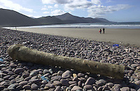 PALM TREE WASHED UP ON KERRY BEACH..<br />
