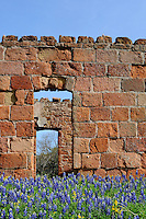 Bluebonnets and old building, Llano, Texas