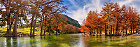 Texas Fall Landscape Panorama - Texas landscape canvas and prints - Frio River as it flow downstream with the cypress trees and maple trees lining the river banks showing their fall colors.  Fall in the Texas hill country can be colorful as the cypress trees turn this rusty shade of orange to red and the maple change from yellow to orange red  along the blue green waters of the Frio river in this texas landscape. Garner has some of the pretty scenery in the autumn.  Also In the background you can see Old Baldy which is on the other side of Garner State Park as the river turns downstream toward Concan texas in this colorful texas landscape panorama.
