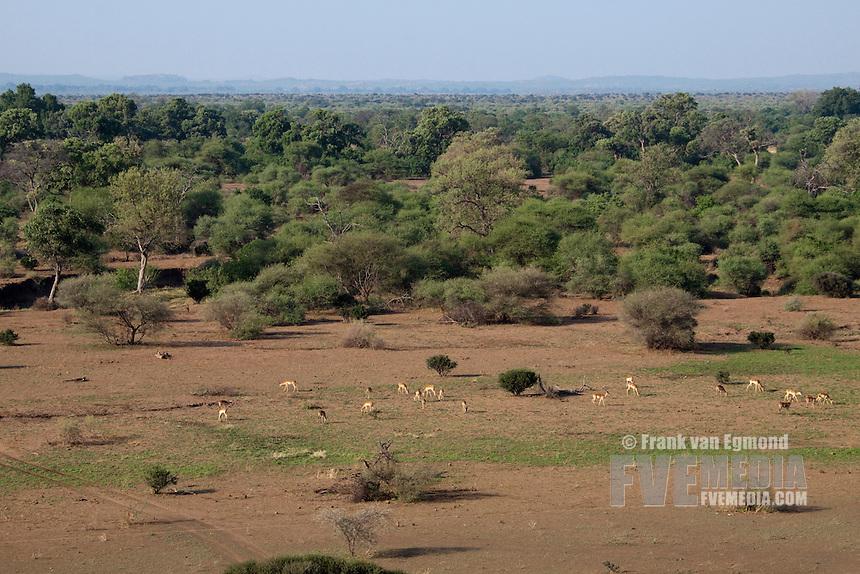 Mashatu Game Reserve..Tuli block, Botswana..November 2010.