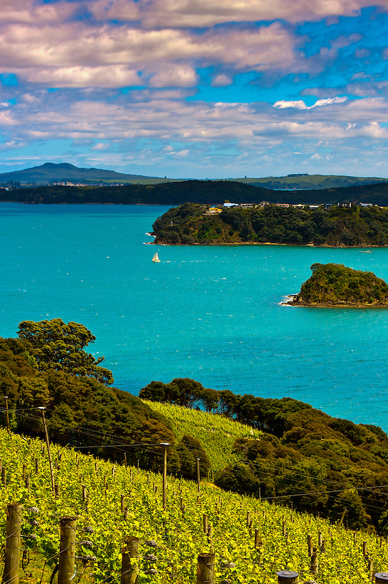 Te Whau Vineyard, Waiheke Island, Hauraki Gulf, near Auckland, New Zealand