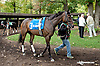 Purple Egg before The Barbaro Stakes at Delaware Park on 10/9/13