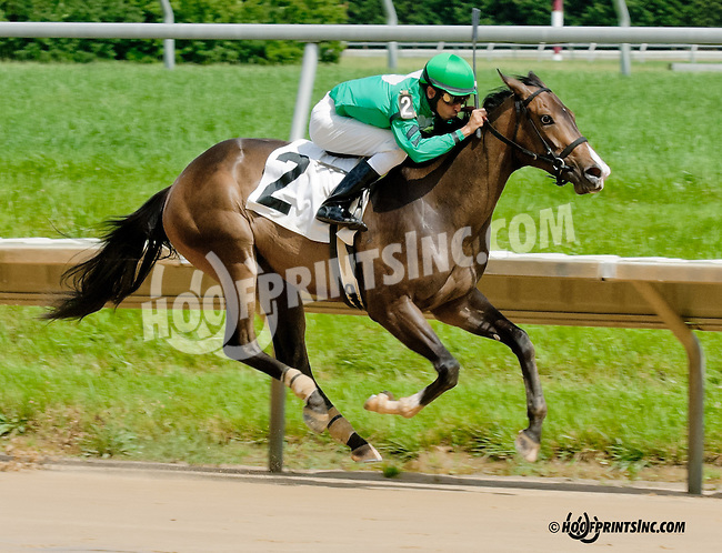 Señora Bella winning at Delaware Park on 6/13/13