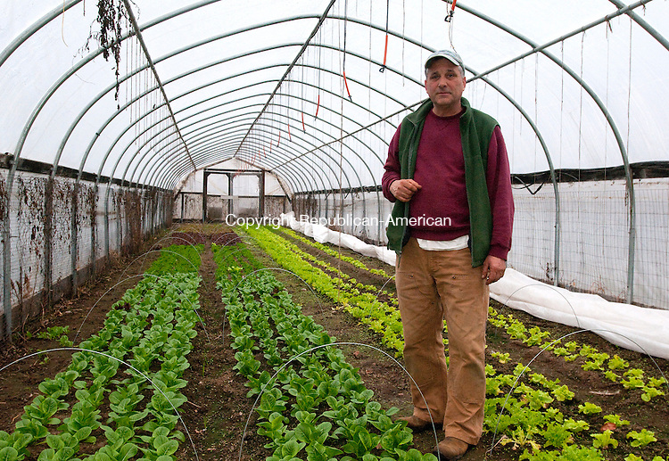 HARWINTON, CT, 16 NOVEMBER 2010-111610JS02--Mark Gauger, owner of Maple View Farm in Harwinton stands inside one of his greenhouses that he uses to grow lettuce in the fall and winter. Gauger, along with other farmers are trying to extend the farmers market season by growing items year round. <br />  Jim Shannon Republican-American