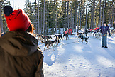 USA, Oregon, Bend, an individual looks out at the dogs being prepared for a sled dog ride at Mt. Bachelor