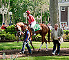 Ile St. Molly before The Go for Wand Stakes at Delaware Park on 6/15/13