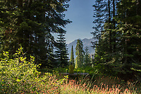 A woman sits on a bench along a trail in Sequoia Crest, CA.  Backlit trees frame the view while glowing indian paintbrushes line the field in front of her.