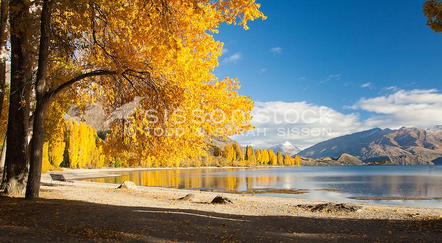 Autumn trees reflected in Lake Wanaka, Southern Lakes, New Zealand