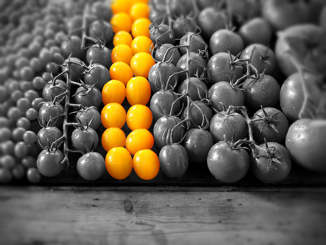 yellow tomatoes amongst other mixed tomatoes