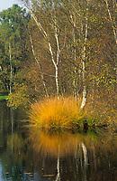 Kaltenhofer Moor, Moorweiher, Schleswig-Holstein, Deutschland