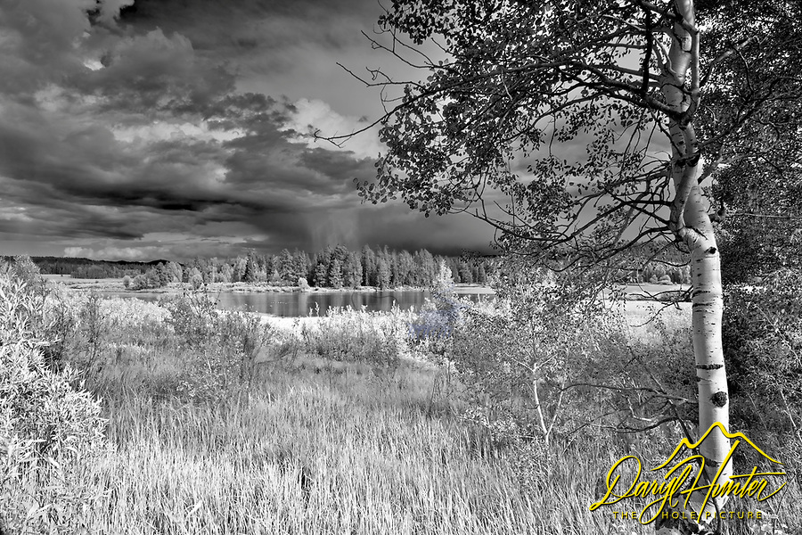 Aspen tree, Thunter Storm, Grand Teton National Park<br />