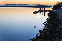 As the sun sets, two American Coots paddle toward the rocky shoreline covered in velvety green moss at the San Leandro Marina while a lone visitor explores the boat launch area.