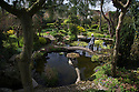 22/04/16<br /> <br /> Japanese garden, near Newark, Nottinghamshire.<br /> <br /> Full story here:<br /> <br /> http://www.fstoppress.com/articles/japanese-gardens-in-the-heart-of-england/<br /> <br /> .Rights Reserved: F Stop Press Ltd. +44(0)1335 418365   www.fstoppress.com.