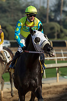 ARCADIA, CA  FEBRUARY 3 : #4 Lombo, ridden by Flavien Prat, return to the connections after winning the Robert B. Lewis Stakes (Grade lll) on February 3, 2018 at Santa Anita Park in Arcadia, CA.(Photo by Casey Phillips/ Eclipse Sortswire/ Getty Images)