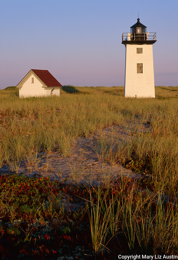 Cape Cod National Seashore, MA: Wood End Light in a sea of dune grasses in early morning light near Provincetown