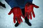 Blood and blubber coats the hands of a hunter after he has fed the remains of a seal to his dog team. A changing climate - which shows itself in warming temperatures, earlier summers, later winters, and shrinking and thinning sea ice - threatens the livelihoods and traditions of some of the last subsistence hunters on Earth, the Polar Inuit communities of far Northwest Greenland.