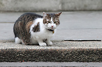Larry the cat in Downing Street. London England on February 05. 2018<br /> CAP/GOL<br /> &copy;GOL/Capital Pictures