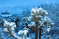 RODEO SNOW