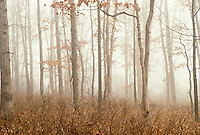 Woods in mist - obscured - middle of the forest in late fall