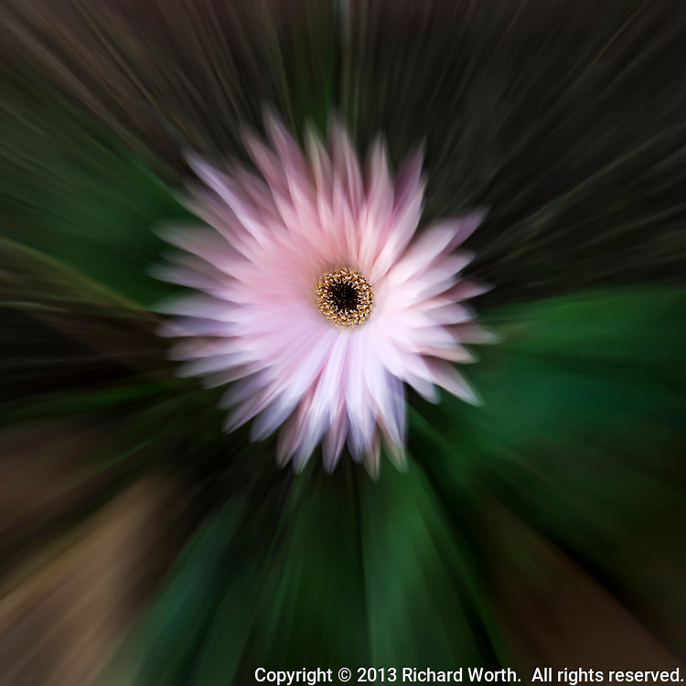 Camera technique and editing software create the impression that all but the center of the flower is in motion.