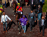 November 3, 2018 : Shamrock Rose #14, ridden by Irad Ortiz, Jr., winner of the Breeders' Cup Filly & Mare Sprint, walking onto the track before the race on Breeders Cup World Championships Saturday at Churchill Downs on November 3, 2018 in Louisville, Kentucky. Ryan Denver/Eclipse Sportswire/CSM