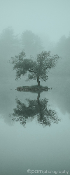 Vertical monochrome panoramic of tree in the middle of a lake on a foggy day