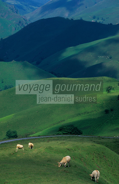 Europe/France/Aquitaine/64/Pyrénées-Atlantiques/Plateau d'Iraty: Pâturages