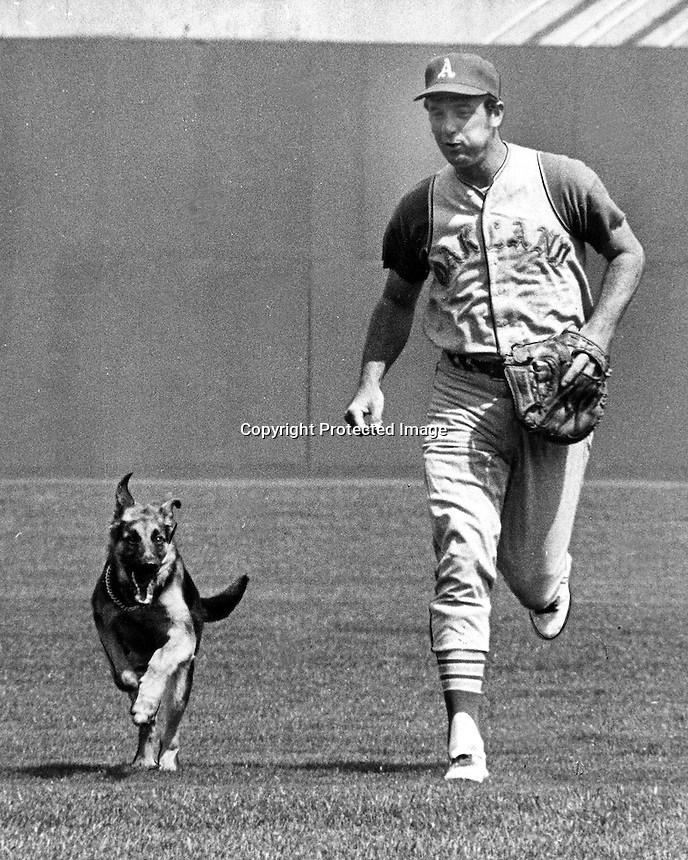 Oakland Athletics catcher Jim Pagliaroni running in the outfield with his dog, before Athletics game.<br />