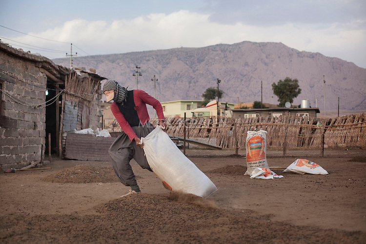 22/05/15. Awbar Village, Darbandikhan area, Iraq. -- A neighbour of Najm pulls a bag full of manure.
