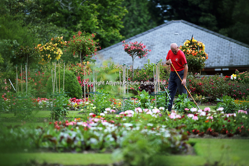Pictured: A gardener tends to the flowers and plants. Friday 07 July 2017<br /> Re: Botanical Gardens in Singleton Park, Swansea, Wales, UK.