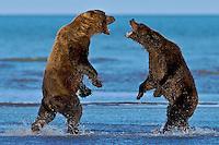 Just Bears